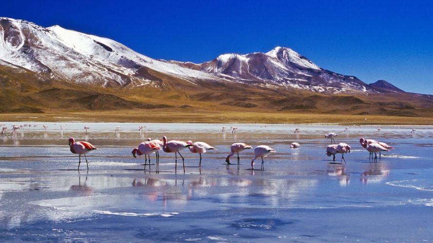 mountains landscape nature mountain flamingo wallpaper
