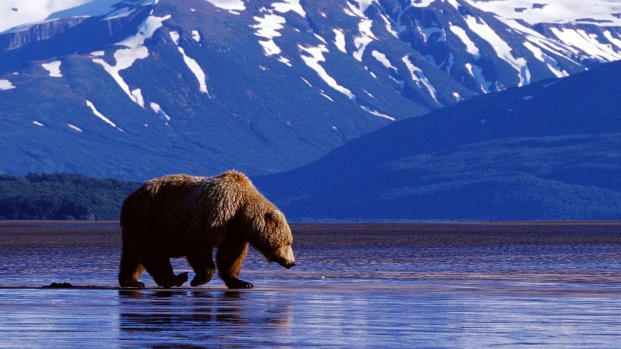 mountains landscape nature mountain bear wallpaper