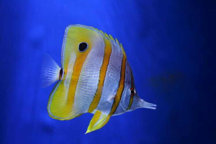 pez tropical colores animales wallpaper