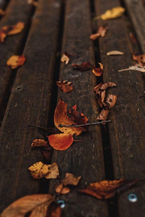 nature leaves autumn beauty mood wallpaper