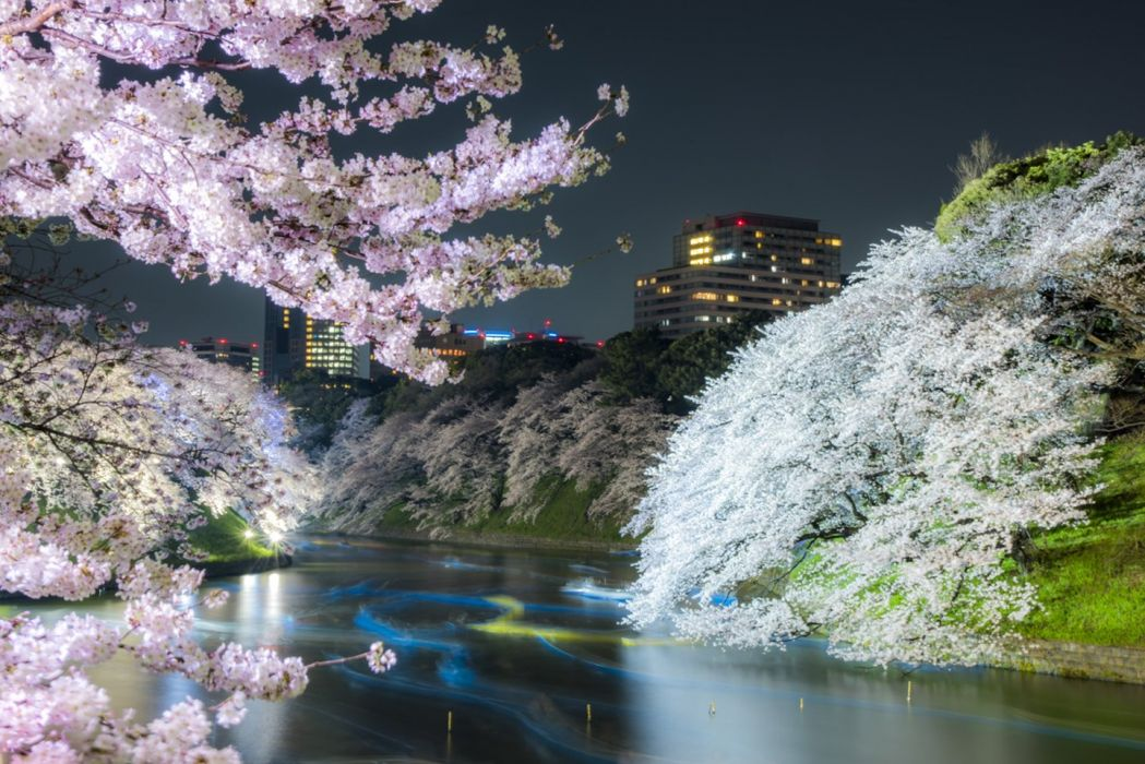 tokyo city spring tree flower beautiful wallpaper