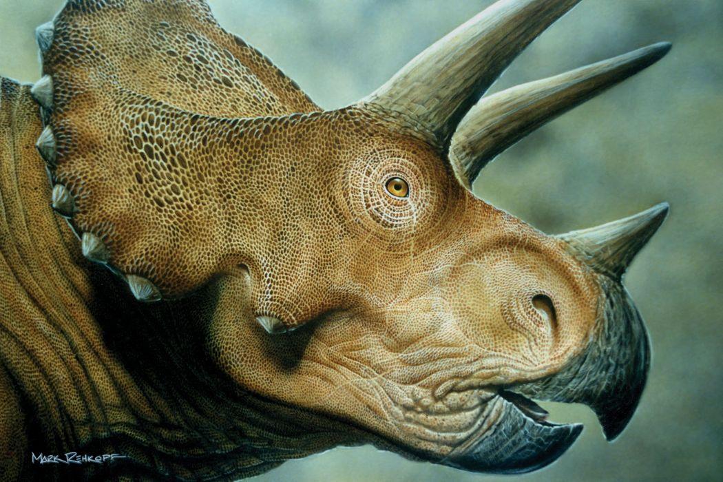 cabeza triceratops dinosaurio reptiles animales wallpaper