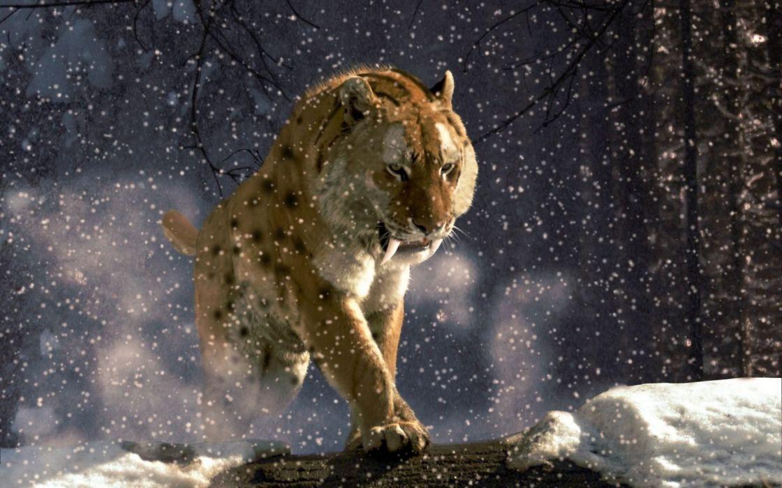 tigre dientes sable animales extinguido wallpaper