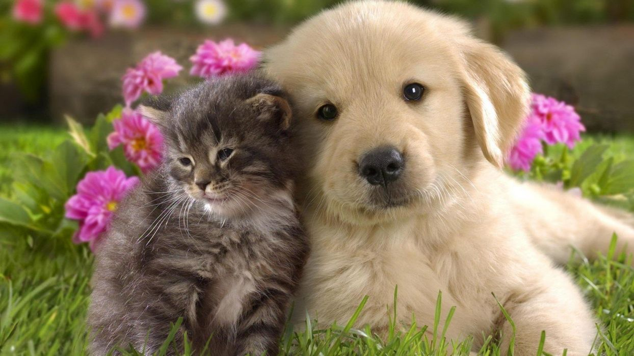 animal cute dog white friend cat flower wallpaper