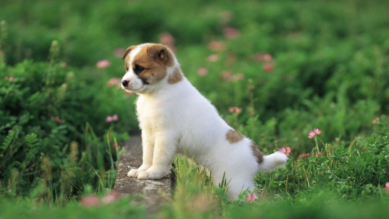 cute puppies animal dog flower wallpaper