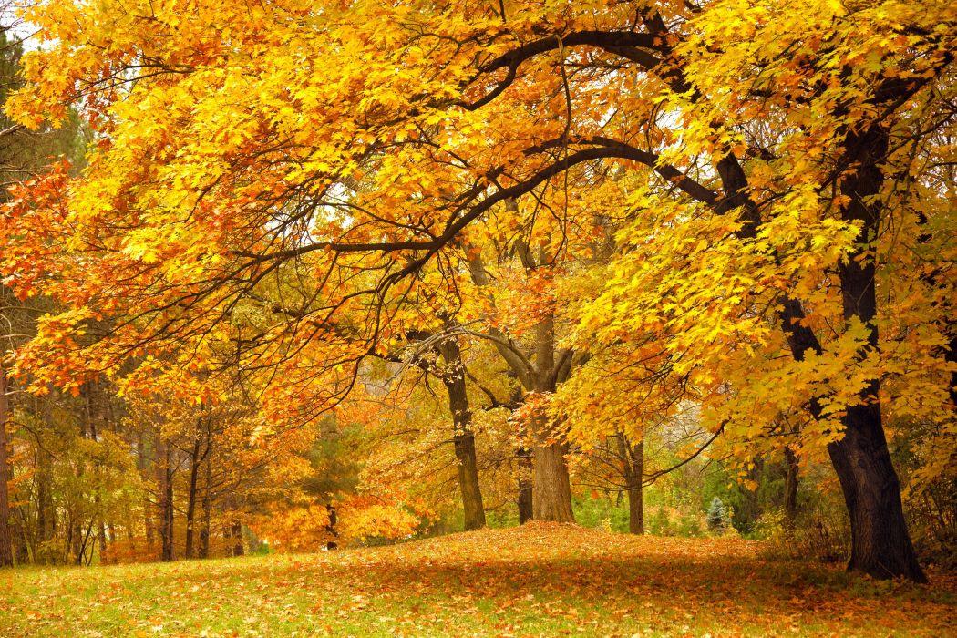 forest trees nature landscape tree autumn wallpaper