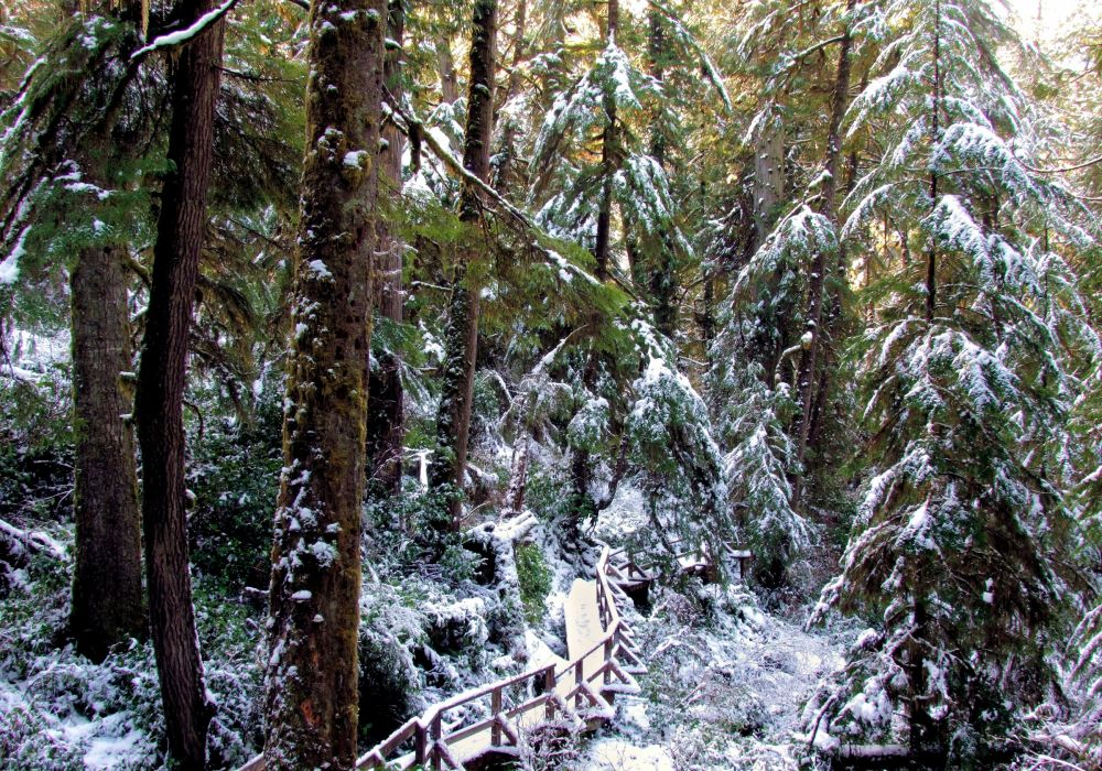 forest trees nature landscape tree winter wallpaper