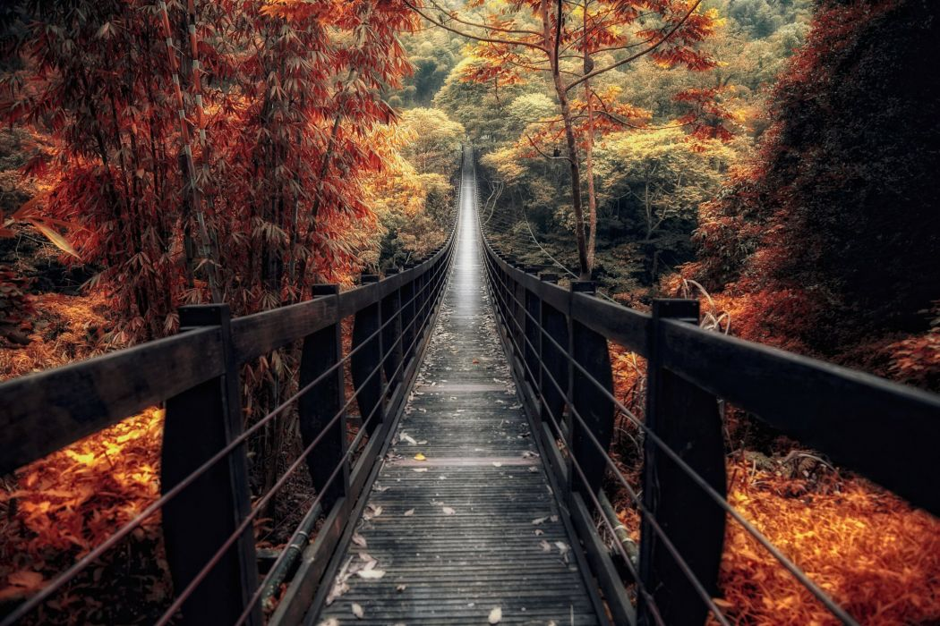 forest trees nature landscape tree autumn bridge wallpaper