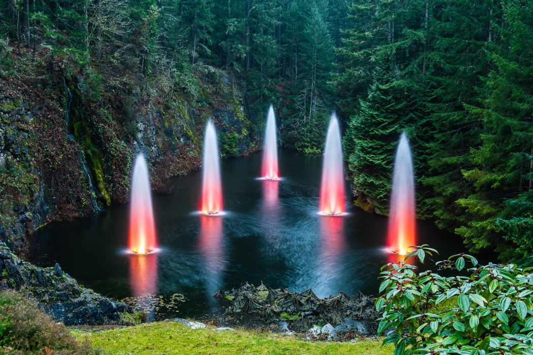 forest trees nature landscape tree fountain wallpaper