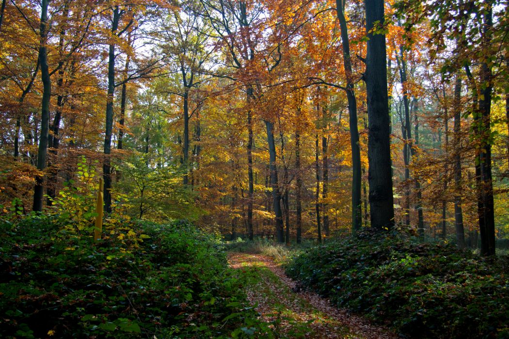 forest trees nature landscape tree autumn wallpaper