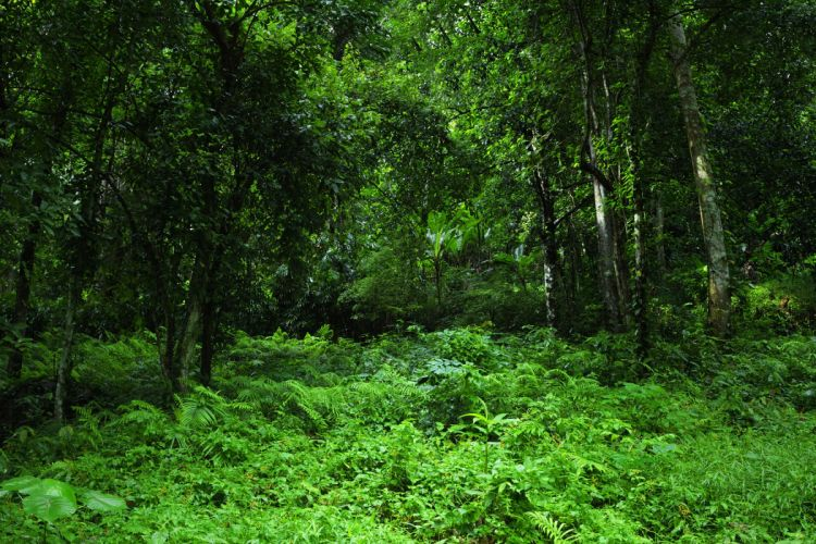 forest trees nature landscape tree wallpaper