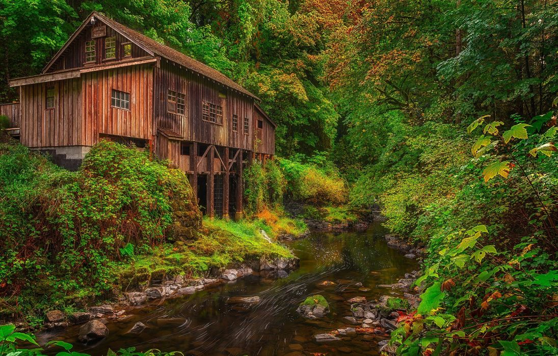 forest trees nature landscape tree autumn mill river wallpaper