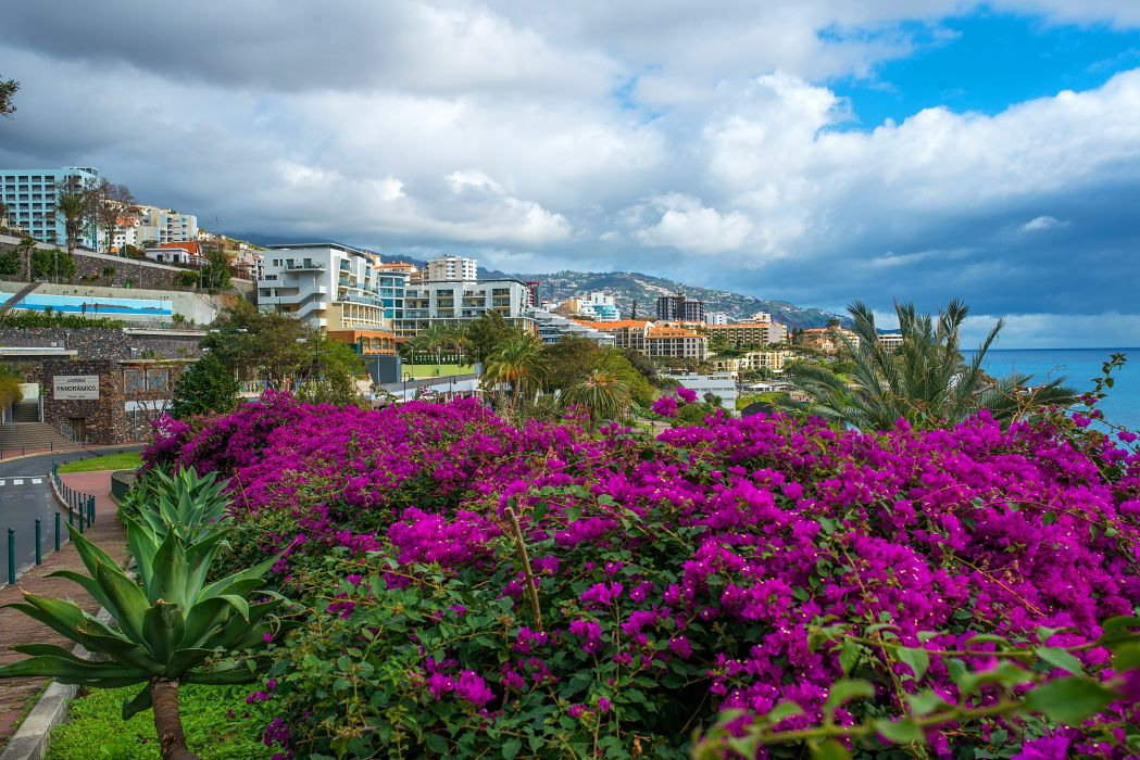 Portugal Houses Bougainvillea Clouds Funchal Madeira Island Cities wallpaper