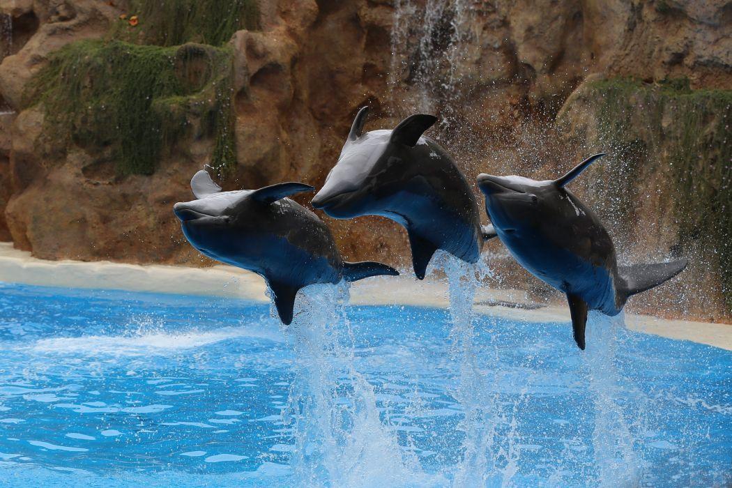 Dolphin Jump Three 3 Spray Animals wallpaper