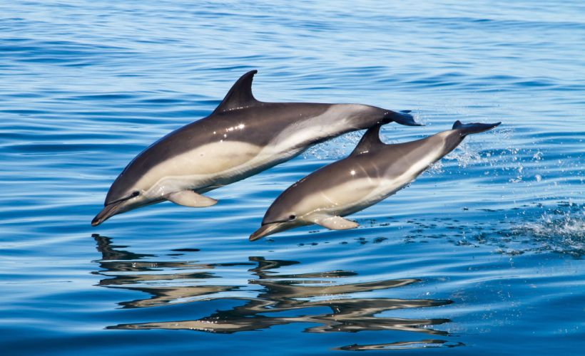 Dolphin sea water wallpaper