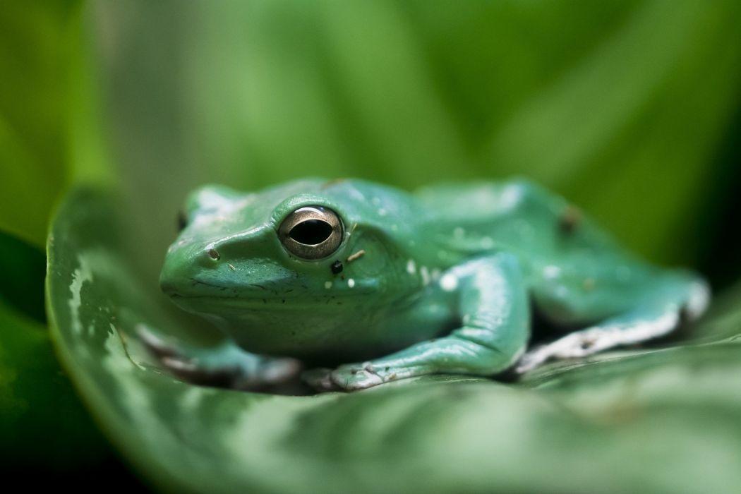 frog leaf green wallpaper