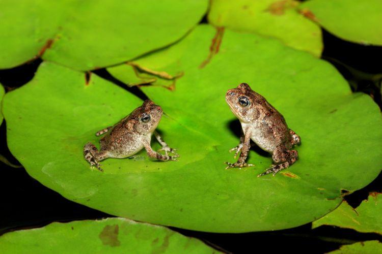frog leaves marsh wallpaper