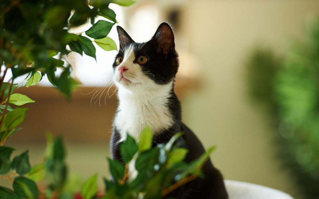 green cat leaves plant wallpaper