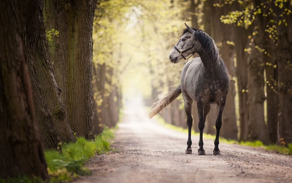 Horse Roads Animals wallpapers wallpaper