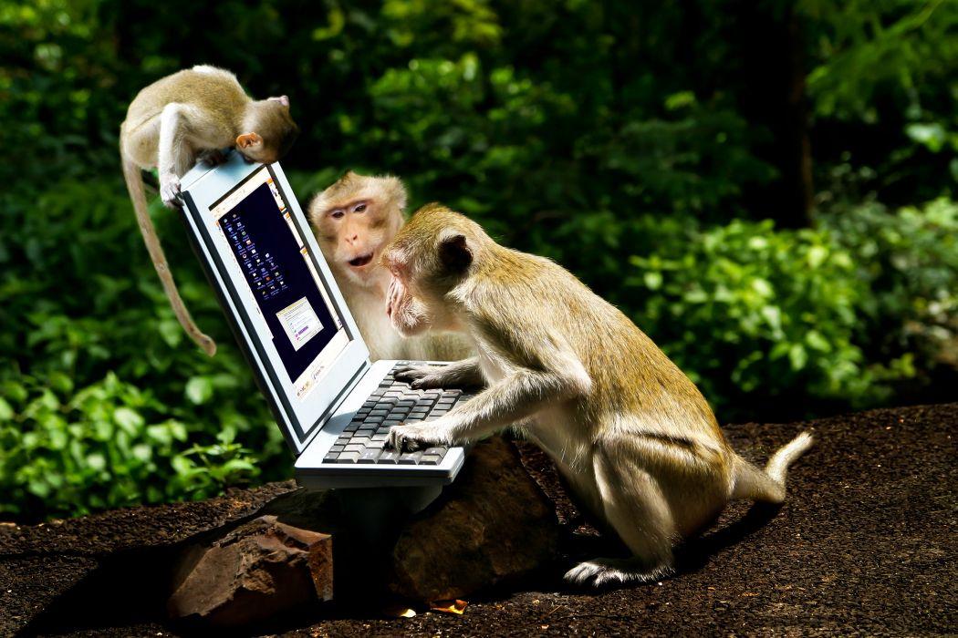 Monkey Cubs Three 3 Laptops Animals wallpaper