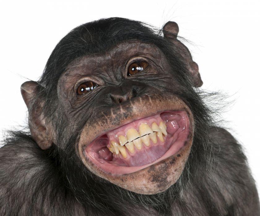 Monkey Snout Teeth Smile Animals Wallpaper