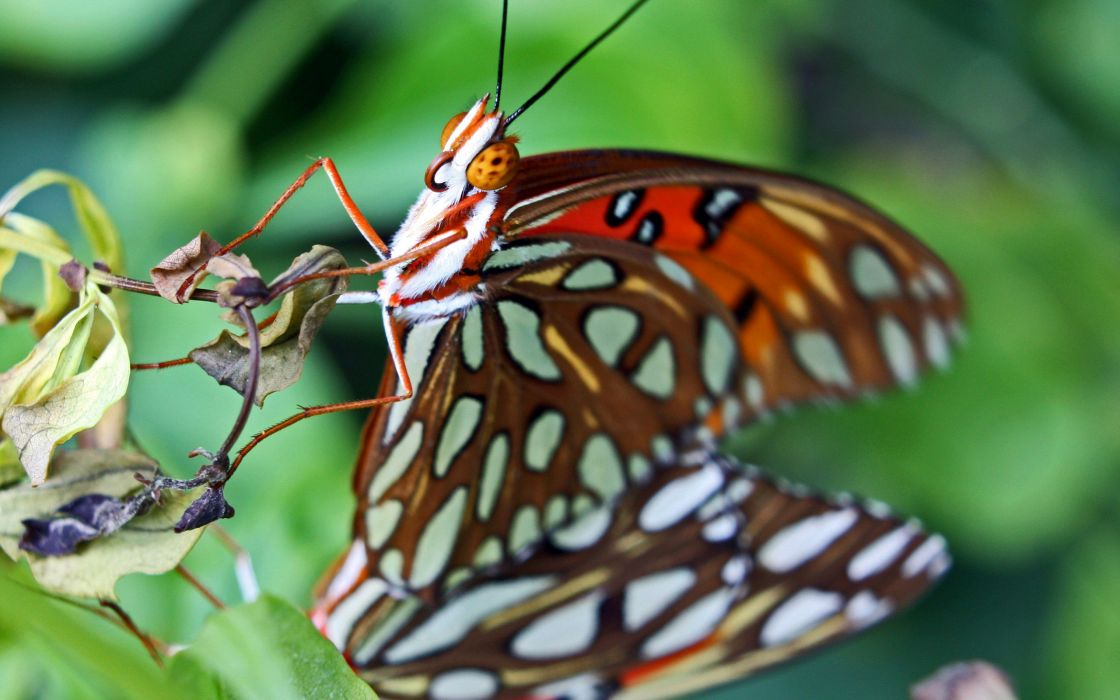 Butterflies Closeup Animals Butterfly wallpaper