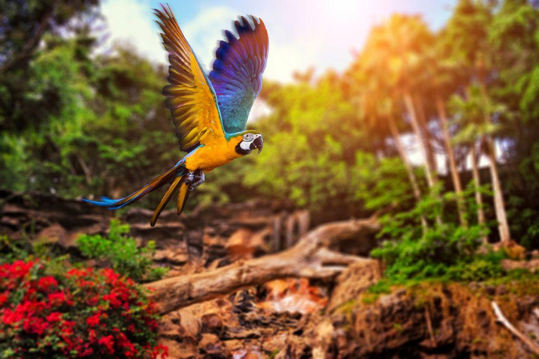 Birds Parrot Wings Animals wallpaper