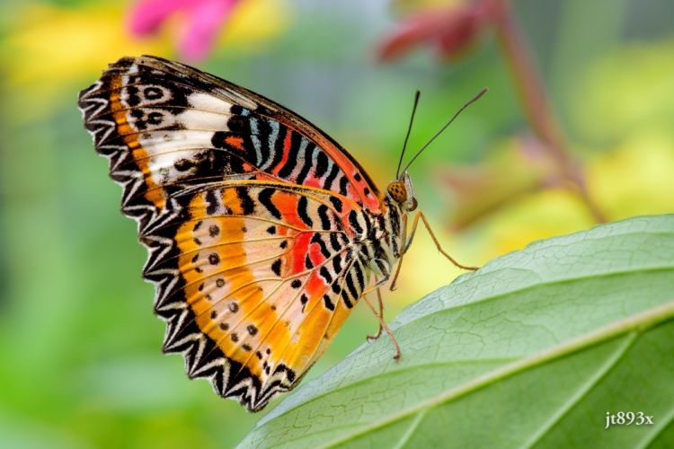 butterfly wings color close-up wallpaper