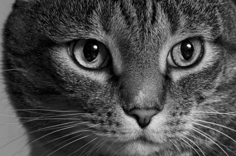 Cats Eyes Glance Whiskers Snout Animals wallpaper