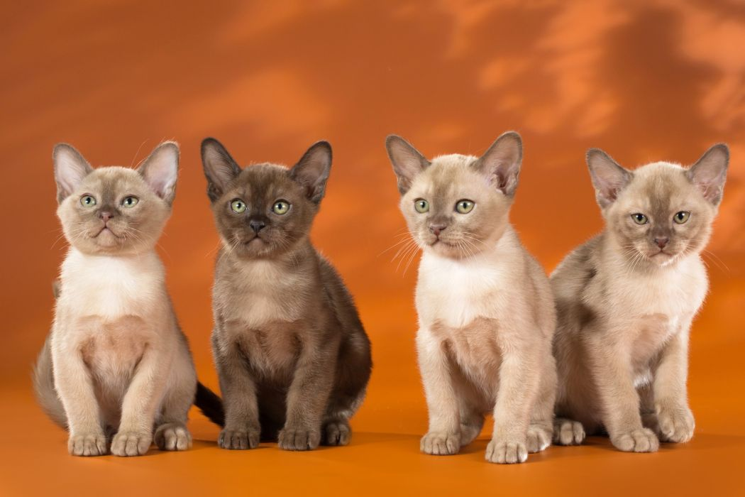 Cats Kitten Glance 4 Animals wallpaper