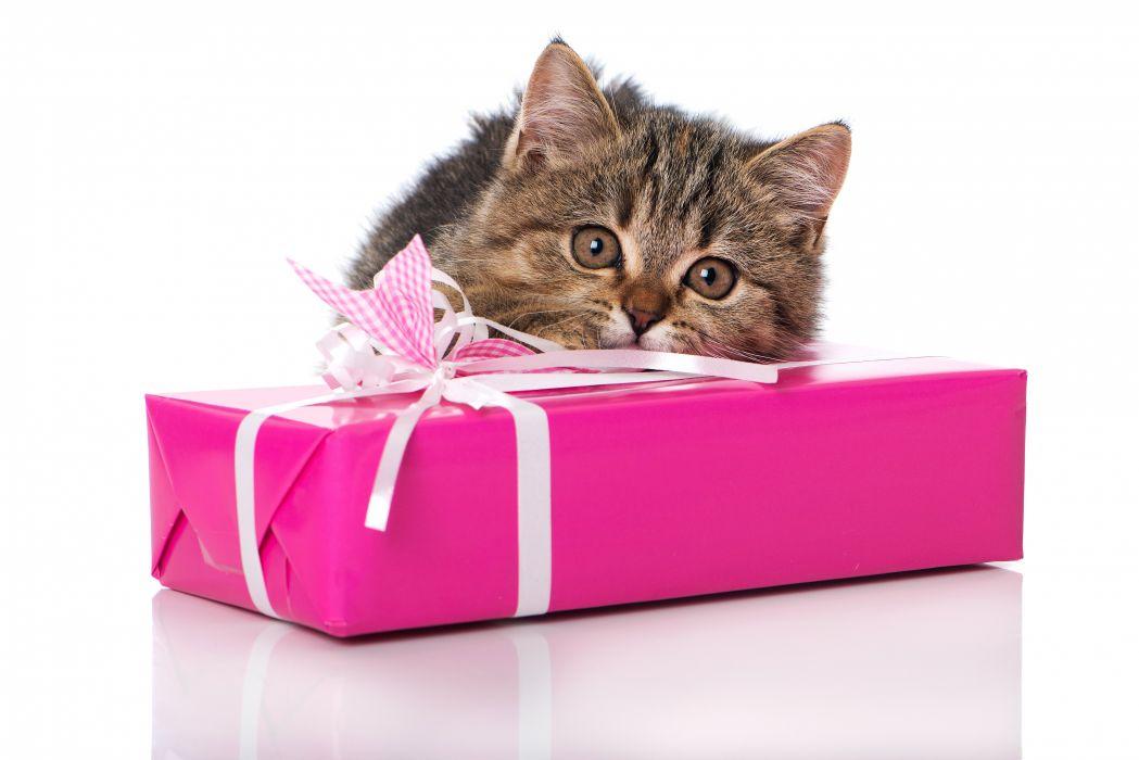 Cats Kitten Gifts Animals wallpaper