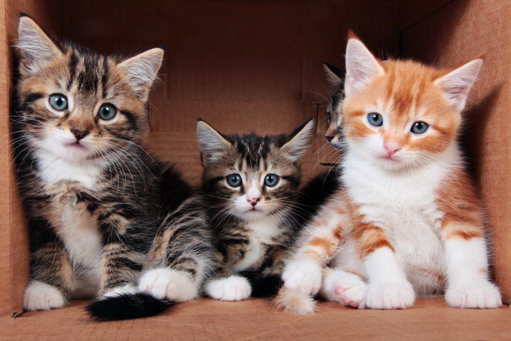 Cats Kitten Three 3 Glance Animals wallpaper