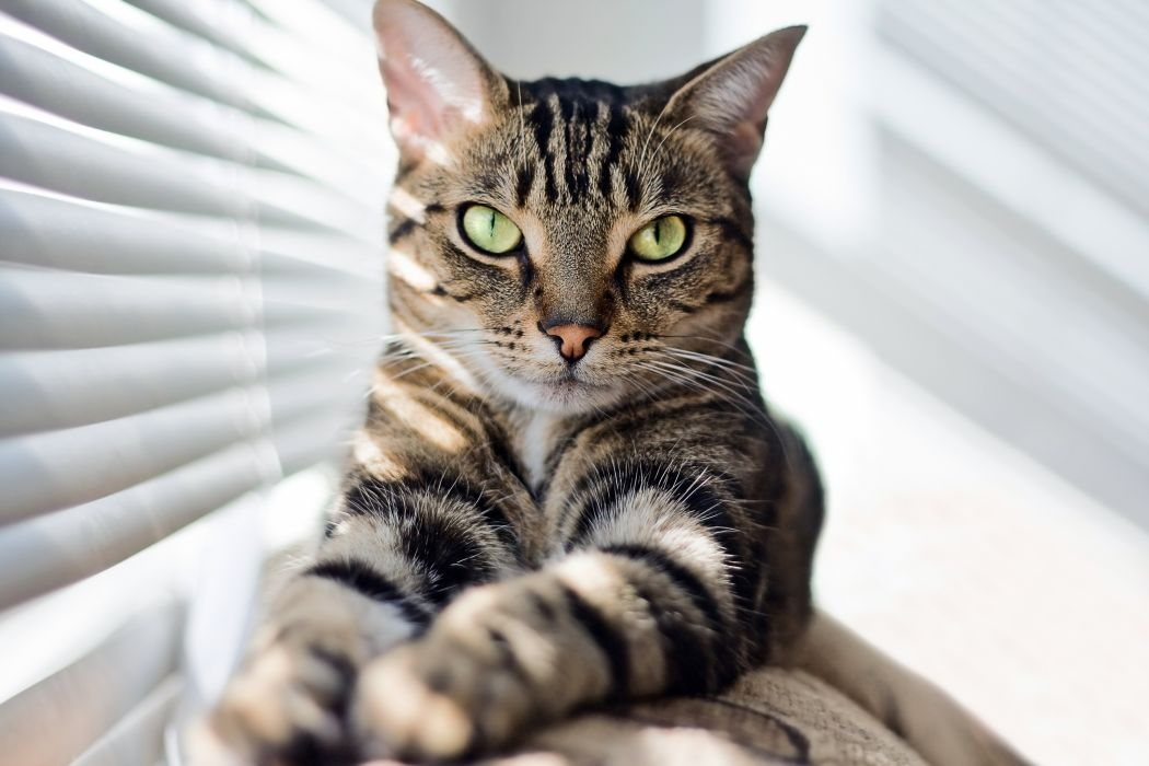 Cats Paws Window blind Glance Animals wallpaper