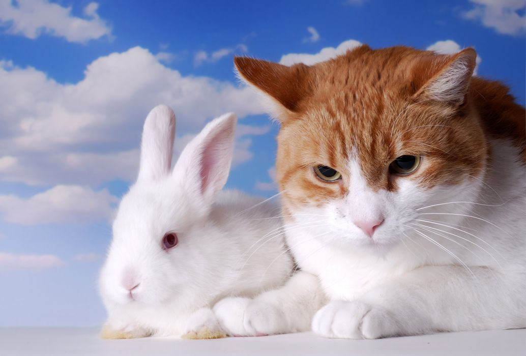 Cats Rabbit Two Animals wallpaper