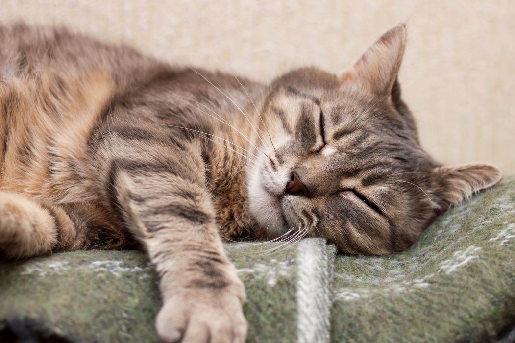 Cats Sleep Paws Animals wallpaper