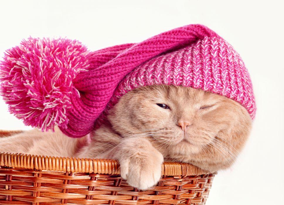 Cats Wicker basket Winter hat Animals wallpaper