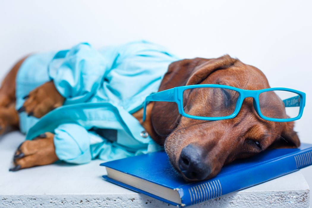 Dogs Dachshund Glasses Book Sleep Animals wallpaper