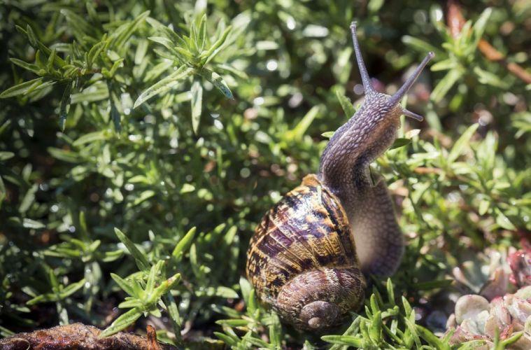 snail shell horns close-up wallpaper