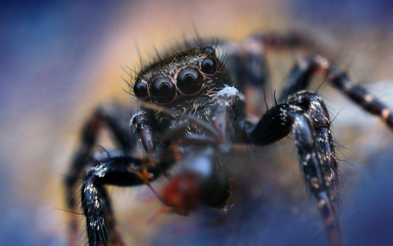 Spider Closeup Animals wallpaper