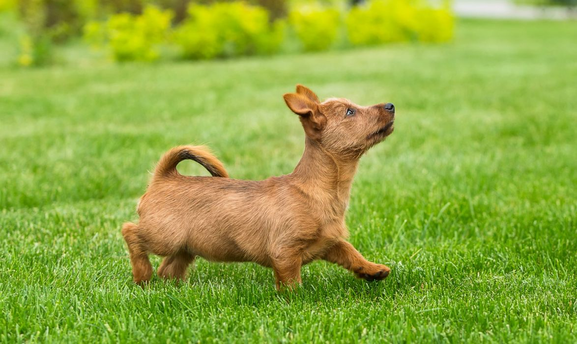 Dogs Grass Lawn Puppy Animals wallpaper
