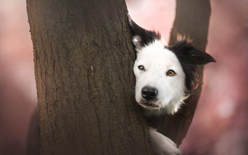 Dogs Trunk tree Glance Animals wallpaper