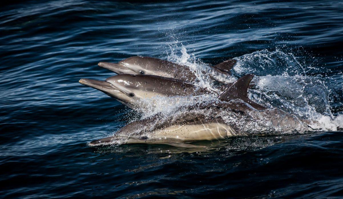 Dolphin Water Spray Animals wallpaper
