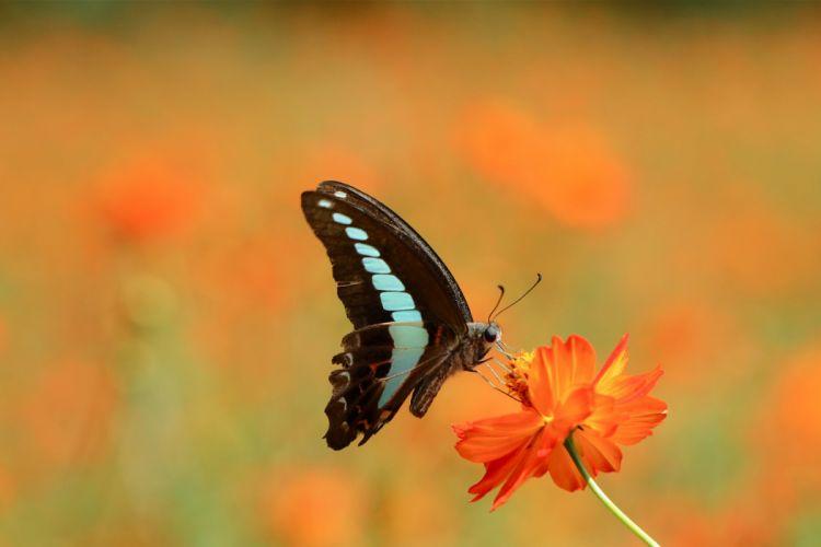 Butterflies Animals Butterfly wallpaper