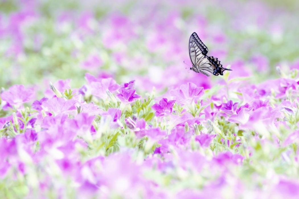 Butterflies Animals Flowers Butterfly wallpaper