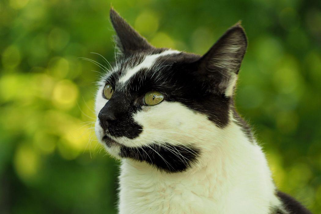 Cats Glance Animals e wallpaper