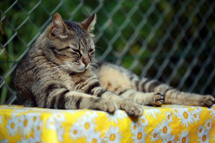 Cats Animals wallpapers wallpaper