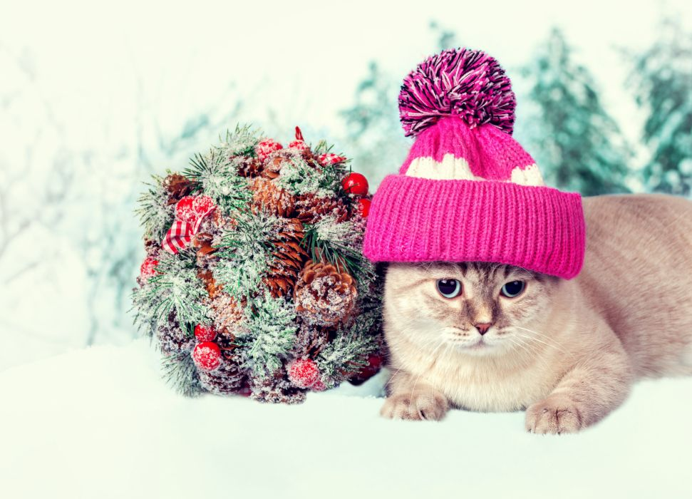 Cats Bouquets Winter hat Animals wallpaper