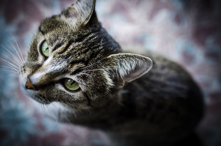 Cats Glance Snout Animals wallpaper
