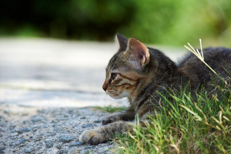 Cats Grass Animals wallpaper