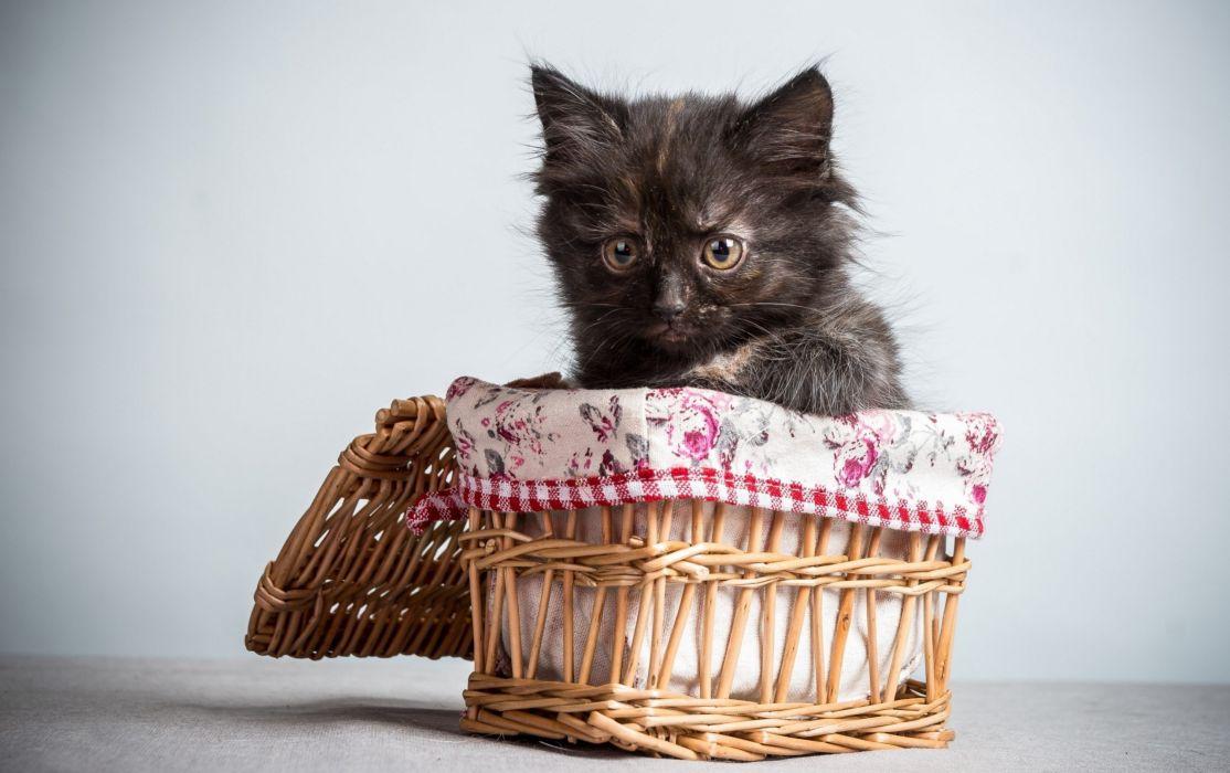 Cats Wicker basket Animals wallpaper